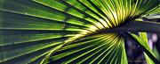Kay Lovingood - Palm Frond