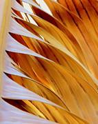 Ranjini Kandasamy - Palm frond