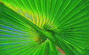 Frond Digital Art Prints - Palm Frond work A Print by David Lee Thompson