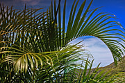 Abstract Palm Trees Photos - Palm Fronds by Cheryl Young