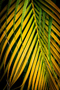 Roger Mullenhour - Palm Fronds Patterns