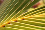 Sharon Mau - Palm Fronds