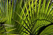 Michelle Wiarda - Palm Fusion