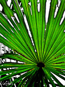 Carol F Austin - Palm Leaf Abstract Art
