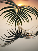Fronds Framed Prints - Palm light Framed Print by Tim Gainey