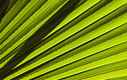 Leaf Art - Palm Lines by Mike  Dawson
