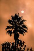 David Millenheft - Palm Silhouette at Sunset