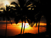 Grey Clouds Photos - Palm Silhouette by Cheryl Young