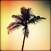 Florida Flowers Posters - Palm Silhouette Sunset Poster by Chris Andruskiewicz