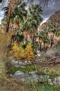 Oasis Digital Art - Palm Springs Oasis in HDR by Matthew Bamberg