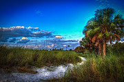 Saw Palmetto Prints - Palm Trail Print by Marvin Spates