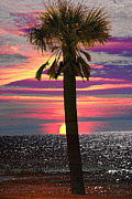Michele Kaiser - Palm Tree at Sunset