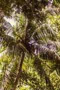 Martha Brae River Prints - Palm Tree Breeze Print by Melanie Lankford Photography