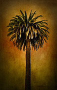 Blend Framed Prints - Palm tree Framed Print by Elena Nosyreva