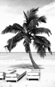 Leaves Digital Art Acrylic Prints - Palm Tree in Black and White Acrylic Print by Glennis Siverson