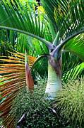 Palm Tree Inflorescence In The Rainforest  Print by Karon Melillo DeVega