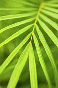Greenery Photos - Palm tree leaf by Elena Elisseeva