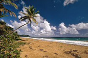 Puerto Rico Photo Posters - Palm Tree on Maunabo Beach Puerto Rico Poster by George Oze