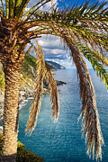 Mediterranean Landscape Prints - Palm Tree on the Coastal Hillside Print by George Oze