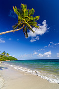Bay Photos - Palm Tree over White Sand Beach by Jess Kraft