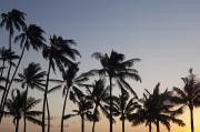 Backlit Posters - Palm Tree Sunset Poster by Brandon Tabiolo
