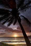 Dustin K Ryan - Palm Tree Sunset Maui...