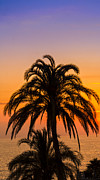 Alex Saunders - Palm Tree Sunset Vertical