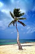 Palm Tree Swayed Print by Kristina Deane