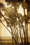 Worn In Art - Palm Trees Along The River by Skip Nall