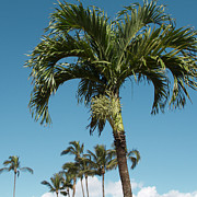 Sharon Mau Posters - Palm trees and blue sky Poster by Sharon Mau