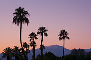 Greg Vaughn - Palm Trees at Dusk