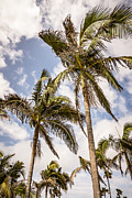 Outdoors Framed Prints - Palm Trees High Resolution Photo Framed Print by Paul Velgos