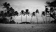 Edward Fielding - Palm Trees Maui Hawaii