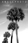 Palmetto Trees Framed Prints - Palm Trees Framed Print by Wendy Mogul