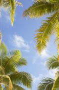 Featured Metal Prints - Palms and Sky Metal Print by Brandon Tabiolo