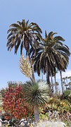 Kimberly-Ann Talbert - Palms and Yucca