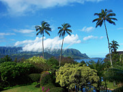 White Clouds Prints - Palms at Hanalei Print by James Eddy