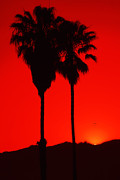 Billie-Jo Miller - Palms at Sunset