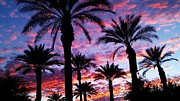 Chris Tarpening - Palms at Sunset