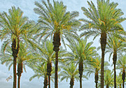 Desert - Palms by Ben and Raisa Gertsberg