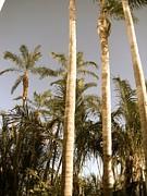 Palms Print by Brynn Ditsche