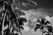 Frond Prints - Palms Bw Print by Cheryl Young