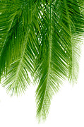 Digital Art - Palms Green by Boon Mee