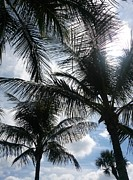 Tiffney Heaning - Palms In Stuart