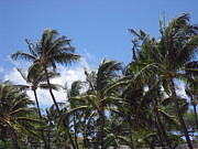 Hawaiian Pictures Prints - Palms In The Wind Print by Athala Carole Bruckner