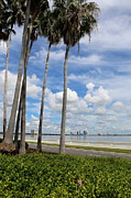 Tampa Skyline Prints - Palms on Bayshore Print by Carol Groenen