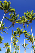 Exotic Leaves Posters - Palms on blue sky Poster by Elena Elisseeva