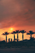 Smoky Skies Prints - Palms on Fire Print by Laurie Search