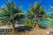 Mauritius Photos - Palms on the Beach. Mauritius by Jenny Rainbow