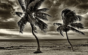 Forida Prints - Palms Sepia Print by Bruce Bain